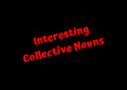 Interesting Collective Nouns