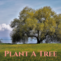 Plant a tree wherever you've space