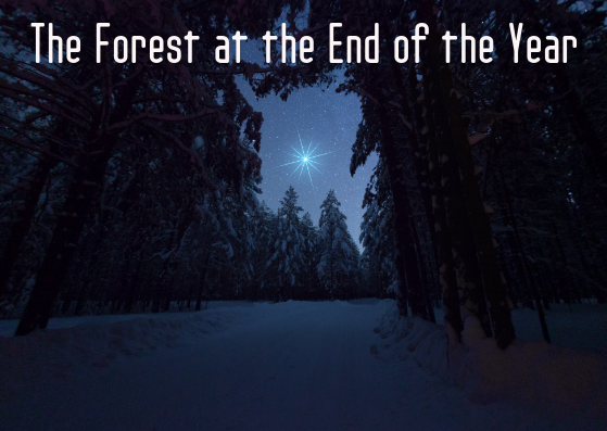The Forest at the End of the Year